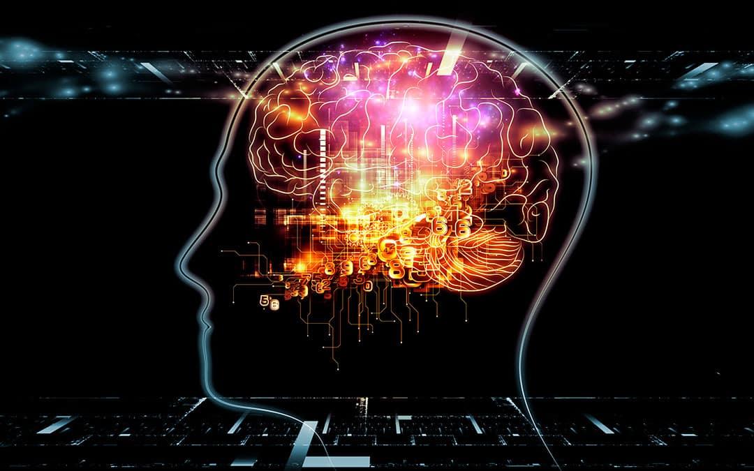פעילותו של המוח האנושי